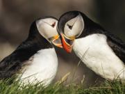 عاشقانههایی از دنیای حیوانات+تصاویر
