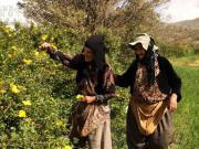 زنان سختکوش,کردستان,امرار معاش,مریوان,shabnamha.ir,شبنم همدان,afkl ih,شبنم ها